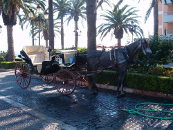 Horse & Carriage at Balcon de Europa, Nerja
