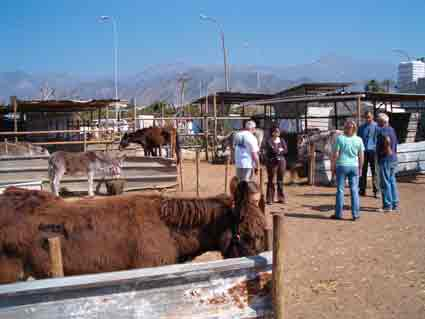 The Neja Donkey sanctuary is open 365 days a year