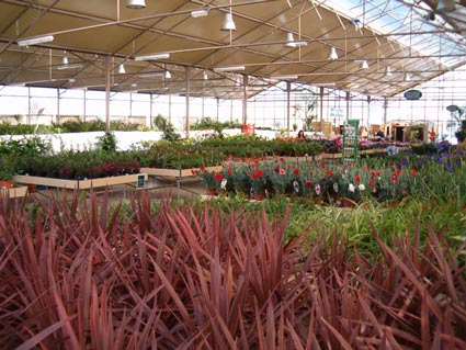 Professional advice on Mediterranean gardening available